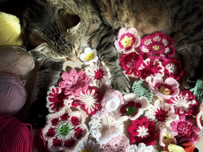 Fotografi av en katt som ligger ved siden av mange heklede blomster i forskjellige farger.