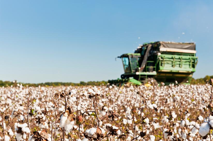 Fotografi av en bomull stripper som sørger for maskinell innhøsting på en åker.