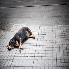 Mat og bærekraft_09_En frodig og fin hund_scanpix_ta9d0c34.jpg