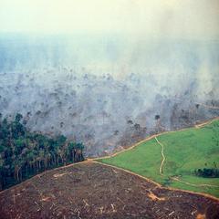 Mat og bærekraft_02_Regnskog og avskoging i Amazonas_GettyImages-462437532.jpg